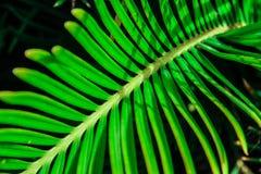 Modello a strisce del primo piano verde tropicale luminoso della foglia fotografia stock
