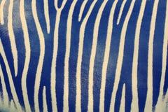 Modello a strisce della pelle della zebra Fotografia Stock