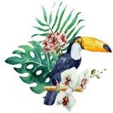 Modello, tropicale, acquerello Fotografia Stock