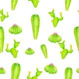 Modello tropicale colorato del quadro televisivo della matita con il cactus bianco del fondo Immagine Stock
