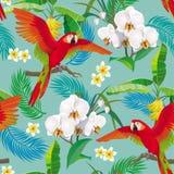 Modello tropicale con il pappagallo rosso Fotografia Stock Libera da Diritti