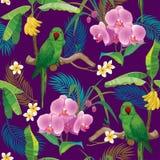 Modello tropicale con il pappagallo verde Fotografie Stock
