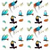 Modello tropicale degli uccelli Fotografie Stock Libere da Diritti