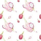 Modello tropicale del bello acquerello disegnato a mano senza cuciture con le fette del dragonfruit su bianco royalty illustrazione gratis