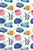 Modello tropicale del pesce su bianco Immagini Stock Libere da Diritti