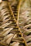 Modello tropicale dell'estratto della cultura Fotografia Stock Libera da Diritti