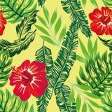 Modello tropicale delle piante verdi dell'ibisco Fotografia Stock