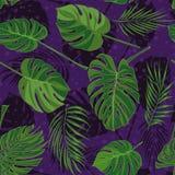 Modello tropicale disegnato a mano senza cuciture con le foglie di palma, foglia esotica della giungla su fondo scuro Fotografia Stock