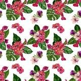 Modello tropicale senza cuciture con i fiori esotici fotografie stock libere da diritti