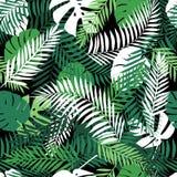 Modello tropicale senza cuciture con le foglie di palma Immagine Stock