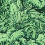 Modello tropicale senza cuciture delle foglie per il tessuto di modo, linea nera illustrazione di vettore della pianta Immagine Stock