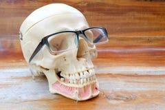 Modello umano di anatomia del cranio Fotografia Stock Libera da Diritti