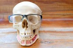 Modello umano di anatomia del cranio Immagine Stock Libera da Diritti