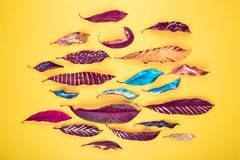 Modello variopinto delle foglie fotografie stock libere da diritti