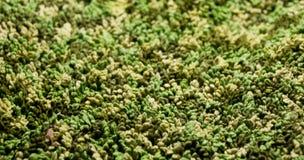 Modello verde del filato Immagini Stock