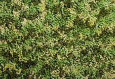 Modello verde del filato Fotografia Stock