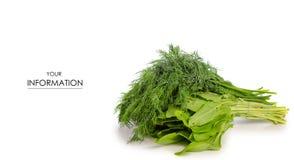 Modello verde dello ssorrel dell'aneto Immagine Stock Libera da Diritti