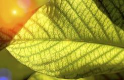 Modello verde di superficie della foglia Immagine Stock