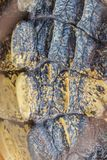 Modello vivo della coda del coccodrillo dal corpo vivente per fondo Fotografia Stock Libera da Diritti