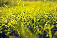 modellsolnedgång för gräs 3d Royaltyfri Bild