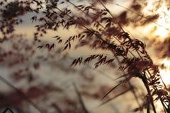 modellsolnedgång för gräs 3d Royaltyfria Foton