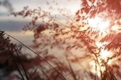 modellsolnedgång för gräs 3d Royaltyfri Fotografi