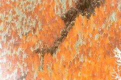 modelltree Arkivfoto