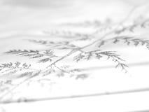 Modelo abstracto 7 del cordón Fotografía de archivo libre de regalías