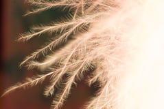 Modelo abstracto de la pluma Foto de archivo libre de regalías