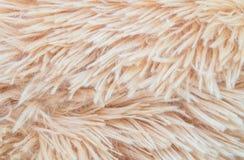 Modelo abstracto superficial de la tela del primer en la alfombra marrón de la tela en el piso del fondo de la textura de la casa Imágenes de archivo libres de regalías