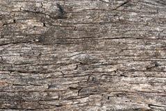 Modelo acodado del tronco de árbol Imagenes de archivo