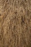 Modelo amarillo secado de la paja del arroz Fotos de archivo libres de regalías