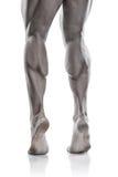 Modelo atlético forte Torso da aptidão do homem que mostra os pés musculares Fotografia de Stock
