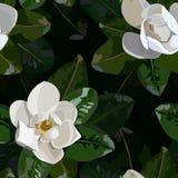 Modelo blanco inconsútil de la magnolia con las hojas verdes stock de ilustración