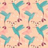 Modelo brillante del vector con los pájaros del colibri y Imagen de archivo
