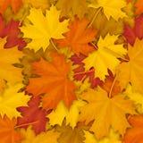 Modelo caido de las hojas de arce Fotografía de archivo libre de regalías