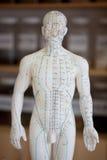 Modelo chinês da acupuntura Imagens de Stock