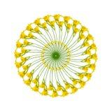 Modelo circular con los anillos de daylilies amarillos stock de ilustración
