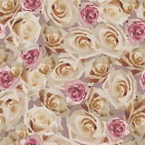 Modelo color de rosa floral Foto de archivo