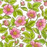 Modelo color de rosa salvaje del vector Fotografía de archivo libre de regalías