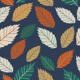 Modelo coloreado en tema de las hojas Autumn Pattern Foto de archivo