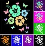 Modelo coloreado hibisco Fotos de archivo