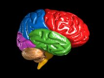 Modelo colorido do cérebro Imagens de Stock Royalty Free