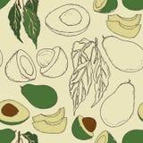Modelo con el aguacate, rebanadas de aguacate con las hojas Puede ser utilizado como el modelo para la materia textil de la cocin Foto de archivo libre de regalías