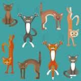 Modelo con jugar de los gatos Imagenes de archivo