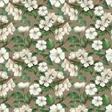 Modelo con las flores de la manzana de la acuarela ilustración del vector