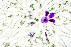 Modelo con las flores púrpuras del iris y del lirio de los valles Foto de archivo libre de regalías