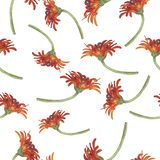 Modelo con las flores rojas de la margarita o del crisantemo del gerbera Ilustración de la acuarela stock de ilustración