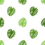 Modelo con las hojas de palma del monstera ilustración del vector