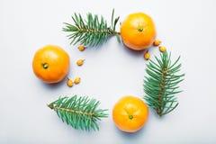 Modelo con las mandarinas anaranjadas, rama de la Navidad del pino Endecha plana, visi?n superior stock de ilustración
